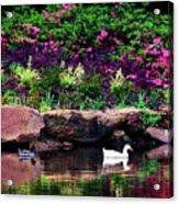 Ethreal Beauty At The Azalea Pond Acrylic Print