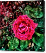 Etude  With       Rose -oil Acrylic Print