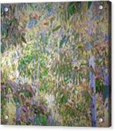 Eucalyptus 012 Acrylic Print