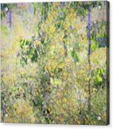 Eucalyptus 013 Acrylic Print