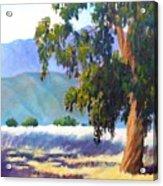 Eucalyptus On The Bluffs Acrylic Print