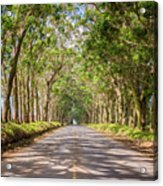 Eucalyptus Tree Tunnel - Kauai Hawaii Acrylic Print