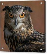 Eurasian Eagle Owl Iv Acrylic Print