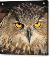 Eurasian Eagle Owl Portrait Acrylic Print
