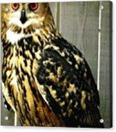 Eurasian Eagle-owl With Oil Painting Effect Acrylic Print