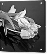 Even Tulips Are Beautiful In Black And White Acrylic Print
