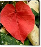 Evening Hau Tree Leaves Acrylic Print