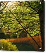 Evening Light 2 Acrylic Print