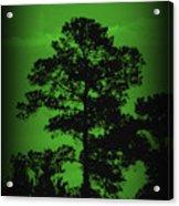 Evening Pine Acrylic Print