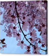 Evening Sky Pink Blossoms Art Prints Canvas Spring Baslee Troutman Acrylic Print