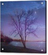 Evening Twinkles Acrylic Print