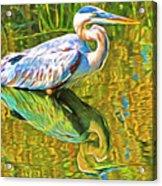 Everglades Blue Heron Acrylic Print