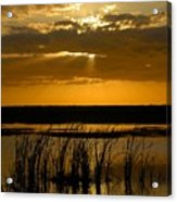 Everglades Evening Acrylic Print