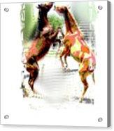 Everglades Ponies Acrylic Print