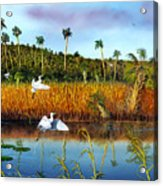 Everglades Sanctuary Acrylic Print