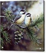 Evergreen Chickadees Acrylic Print