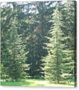Evergreen Dance Acrylic Print