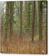Evergreen Fog Acrylic Print