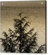 Evergreen Lake Acrylic Print
