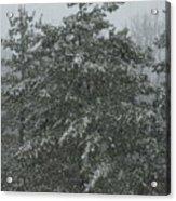 Evergreen Snowfall Acrylic Print