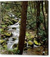 Evergreen Stream Ravine Acrylic Print