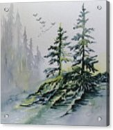 Evergreens In The Mist Acrylic Print