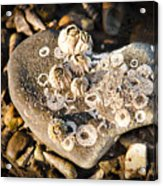 Every Heart Carries A Burden Acrylic Print