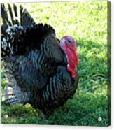 Evil Eye From Foul Turkey Acrylic Print