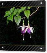 Evining Flowers Acrylic Print