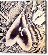 Evol Acrylic Print