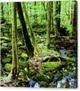 Evolution Of A Forest In Spring  Acrylic Print