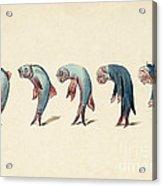 Evolution Of Fish Into Old Man, C. 1870 Acrylic Print