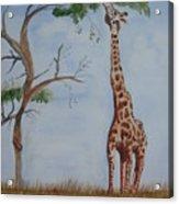 Evolution's Early Stretch Acrylic Print
