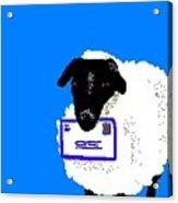 Ewe Have Mail Acrylic Print