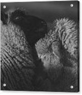 Ewe Talk A Acrylic Print