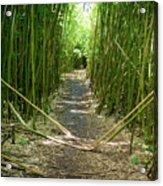 Exlporing Maui's Bamboo Acrylic Print