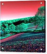 Exmoor In The Pink Acrylic Print