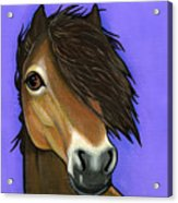 Exmoor Pony  Acrylic Print