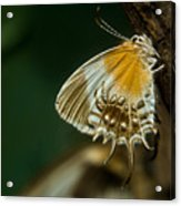 Exotic Butterfly On Tree Bark Acrylic Print