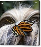 Exotic Hairdo Acrylic Print