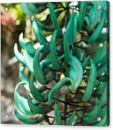 Exotic Jade Vine Acrylic Print