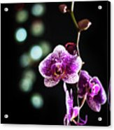 Exotic Orchid 2 Acrylic Print