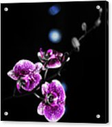 Exotic Orchid 6 V2 Acrylic Print