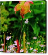 Exotic Orchid Acrylic Print