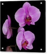 Exotic Orchids Acrylic Print