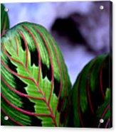 Exotic Plant Acrylic Print