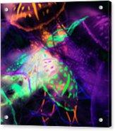 Exotic Rainbows Acrylic Print