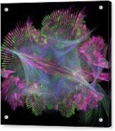 Exotic Seashells Acrylic Print