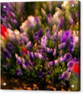 Exploding Flowers 1 Acrylic Print