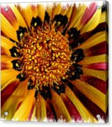 Explosion Of Color - Framed Acrylic Print